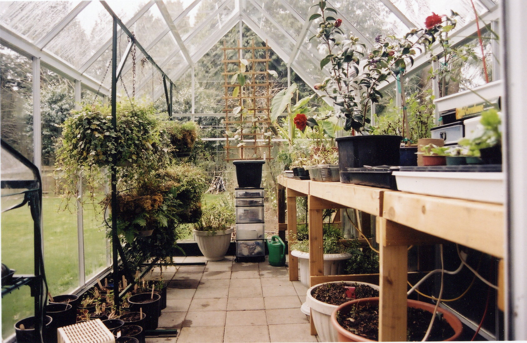 greenhouse growing