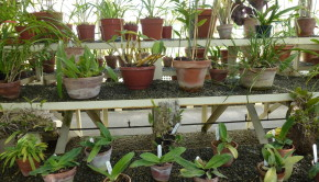 Propagating orchids.