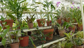 Over-wintering greenhouse plants